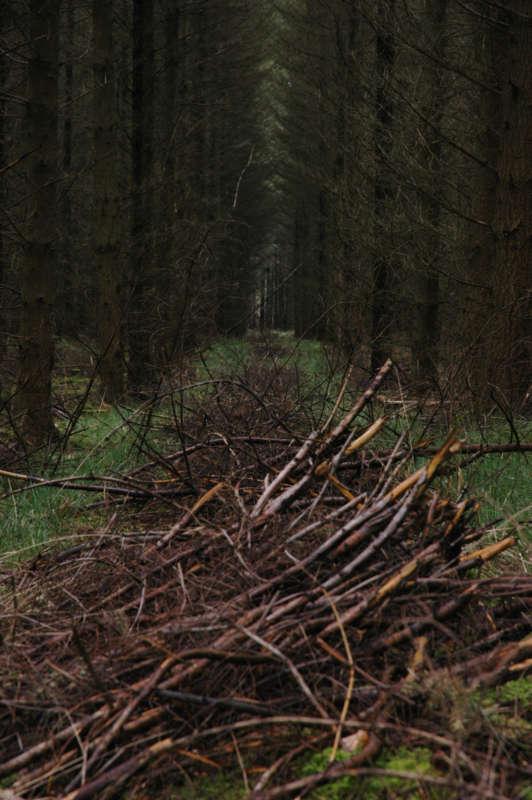 Wye Forest