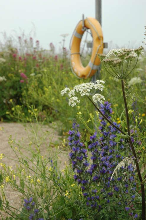 Wildflower Beach Ring