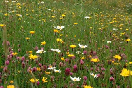 Meadow Photo Bristol Apr 18