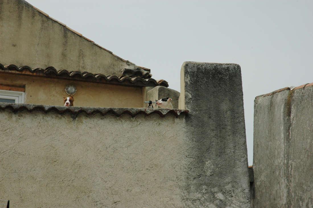 Dogs Hiding
