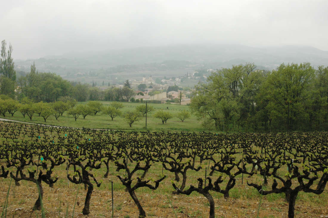 French Wine Vines