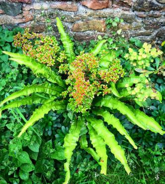 azalea-and-fern