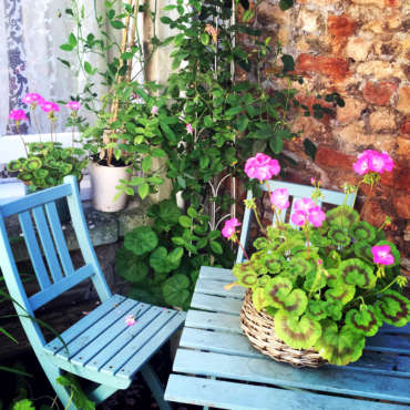 courtyard-and-geraniums 1