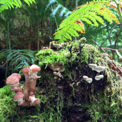 fungi-and-ferns