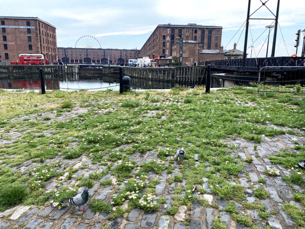 Dock Cobble Plants