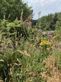 Native Wildflowers Site