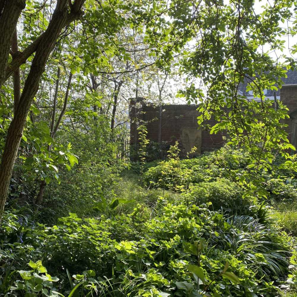 Woodland Garden Site Photo