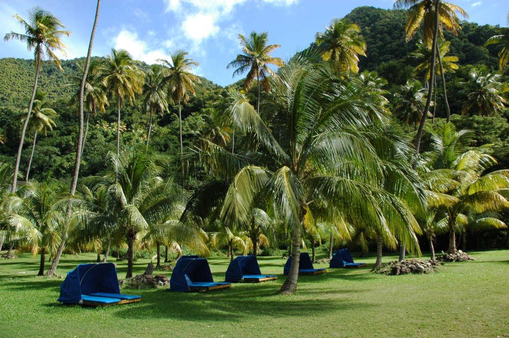 Palm Tree Beds